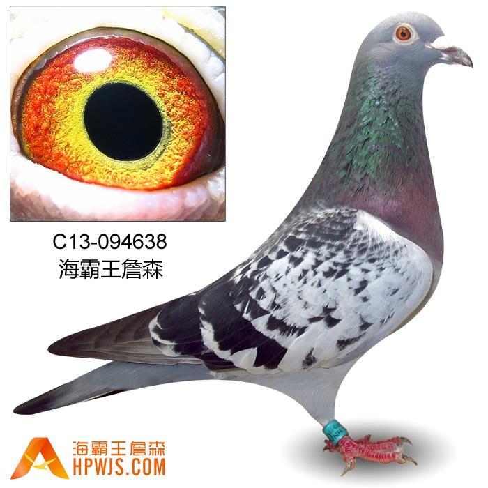 93黑眼红狐孙c13-094638 - 海霸王詹森研究中心